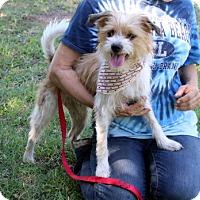 Adopt A Pet :: Milo - Arlington, TX