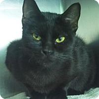 Adopt A Pet :: Ophelia - New Orleans, LA
