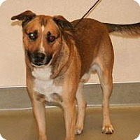Adopt A Pet :: Mayhem - Wildomar, CA