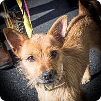 Adopt A Pet :: Ichabod