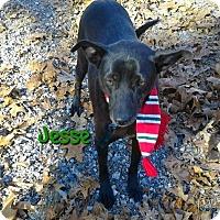 Adopt A Pet :: Jesse - Princeton, KY