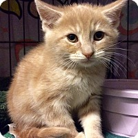 Adopt A Pet :: Cupid - East Brunswick, NJ