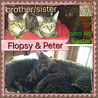 Adopt A Pet :: Flopsy and Peter - Brentwood, NY