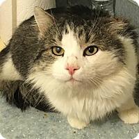 Adopt A Pet :: Walter - Brimfield, MA