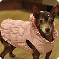 Adopt A Pet :: Lauren - New York, NY