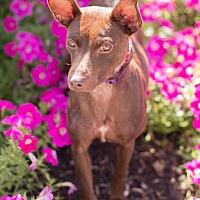 Adopt A Pet :: Bonnie - Syracuse, NY