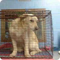 Adopt A Pet :: URGENT ON 3/4  san Bernardino - San Bernardino, CA