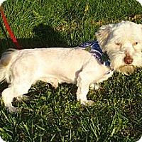 Adopt A Pet :: CHAD - ROCKMART, GA