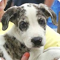 Adopt A Pet :: Ruby B#3M - Orlando, FL
