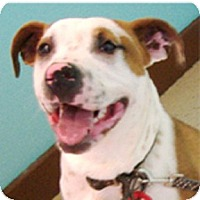 Adopt A Pet :: Colton super - Sacramento, CA