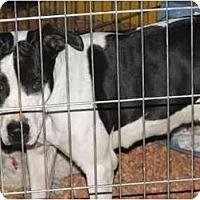 Adopt A Pet :: Detroit - Gilbert, AZ