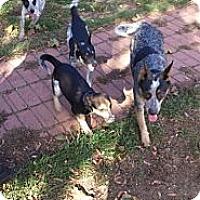 Adopt A Pet :: Lani - selden, NY