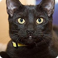 Adopt A Pet :: Margo - Irvine, CA