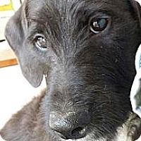 Adopt A Pet :: Delilah - Scottsdale, AZ