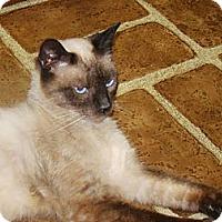 Adopt A Pet :: Sweetie - Kalamazoo, MI
