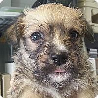 Adopt A Pet :: Mildred#8F - Orlando, FL