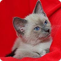 Adopt A Pet :: Saejin - Davis, CA