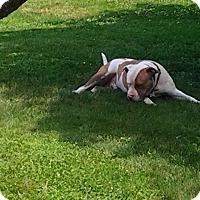 Adopt A Pet :: Hercules - Upper Sandusky, OH