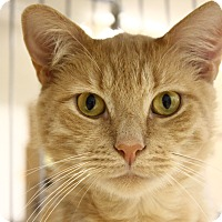 Adopt A Pet :: Riley - North Branford, CT