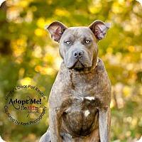 Adopt A Pet :: Coco - Medina, OH