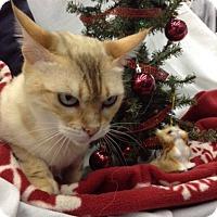 Adopt A Pet :: Indira - Fairborn, OH