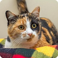 Whatcom Humane Society Cats For Adoption