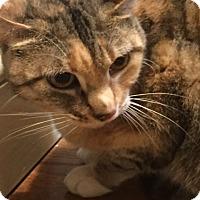 Adopt A Pet :: Midora - Philadelphia, PA