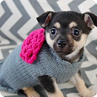 Adopt A Pet :: Adelaide - Irvine, CA