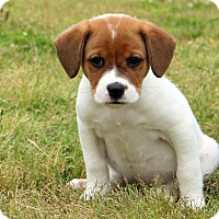 Adopt A Pet :: Bosco - Glastonbury, CT