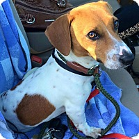 Adopt A Pet :: Tyler - Andalusia, PA