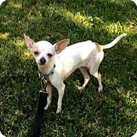 Adopt A Pet :: Dainty - Santa Clarita, CA