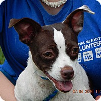 Adopt A Pet :: Coco(13 lb) AWESOME Girl! - SUSSEX, NJ