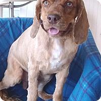 Adopt A Pet :: Marley - Santa Barbara, CA