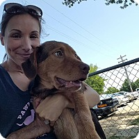 Adopt A Pet :: Amos - Uxbridge, MA