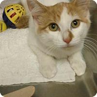 Adopt A Pet :: Twinkie - Glen cove, NY