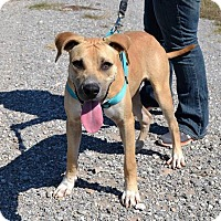 Adopt A Pet :: Yeller - Elgin, OK