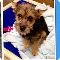 Adopt A Pet :: Hank - Rathdrum, ID