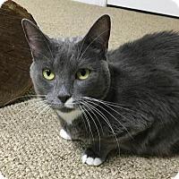 Adopt A Pet :: Dorney - Breinigsville, PA