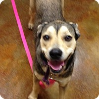 Adopt A Pet :: Sadie - Mountain View, AR