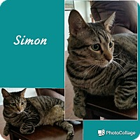 Adopt A Pet :: Simon - Arlington/Ft Worth, TX