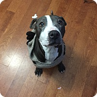 Adopt A Pet :: Eleanor - Indianapolis, IN