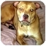 Photo 1 - Labrador Retriever Mix Dog for adoption in Forest Hills, New York - PAL