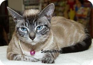 Siamese Cat for adoption in Sacramento, California - Samantha M