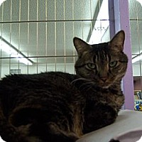 Adopt A Pet :: Mandy - Whittier, CA