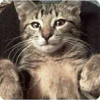 Adopt A Pet :: Luigi - Summerville, SC