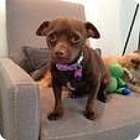 Adopt A Pet :: Charlatte - Culver City, CA