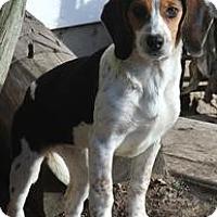 Adopt A Pet :: Zena - Hop Bottom, PA