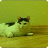 Adopt A Pet :: Comet - San Ramon, CA
