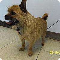 Adopt A Pet :: Jobin - Shawnee Mission, KS