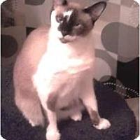 Adopt A Pet :: Laitte - Jacksonville, FL